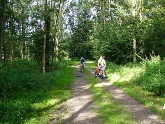 Forêt de l'Illwald