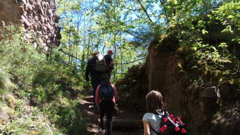 Du Hohenstein aux deux châteaux de Ringelstein